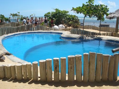 Projeto Tamar, Praia do Forte by Gina Moraes.